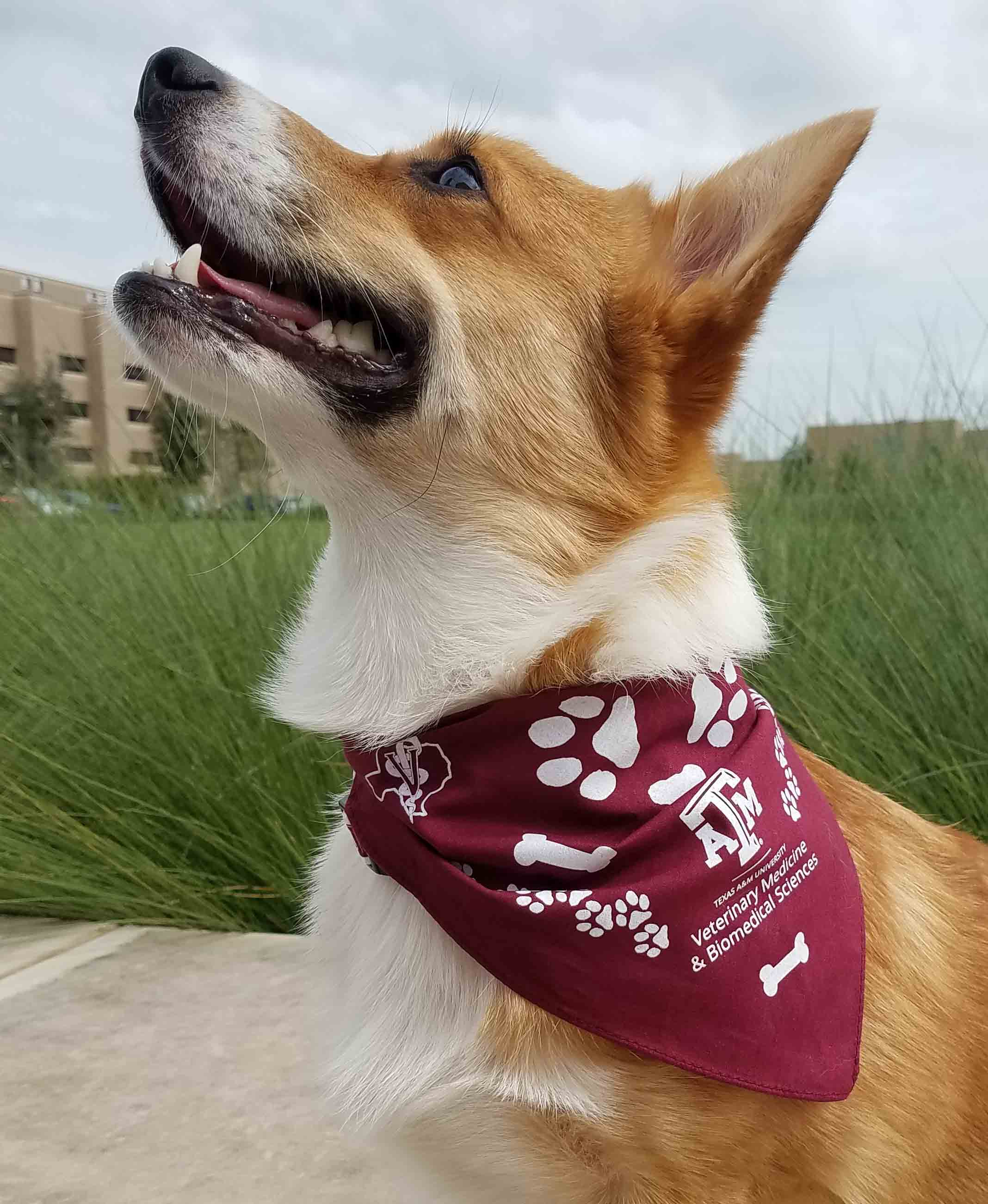 Pet Bandana - large